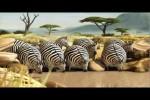 Video - ROLLIN' SAFARI - das Wasserloch