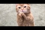Video - Was Tiere So Denken 85
