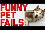 Video - Lustige Hoppalas mit Tieren
