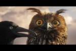 Video - Lustige Vögel auf der Stromleitung