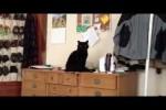 Video - der (lebende) Bruder von Simons Cat