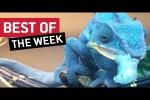 Video - die besten Videos der 3. Februar-Woche