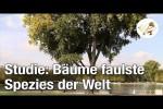 Video - Studie entlarvt Bäume als faulste Spezies der Welt (Postillon24)