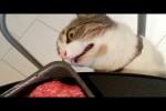 Video - Es sind die Katzen, die einen immer wieder zum Lachen bringen