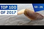 Video - Top 100 Viral Videos des Jahres 2017 - Teil 3