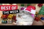 Video - die besten Videos der 1. Dezember-Woche