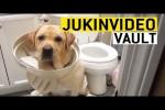 Video - Schuldbewusste Hunde