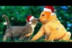 Video - Lustige Weihnachts-Werbevideos mit Hunden und Katzen