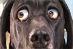 Video - Lustiger Werbespot mit Hund
