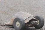 Video - 90-jährige Schildkröte bekommt Geh-Hilfe