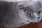 Video - Katzen haben ein schlechtes Gewissen