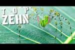 Video - 10 unheimliche Fakten über Spinnen