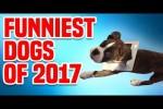 Video - Witzige Hunde