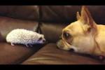 Video - Lustige Hunde treffen auf niedliche Baby-Tiere