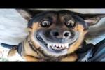 Video - Lustige Katzen und Hunde