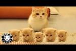Video - Katzen wie sie halt so sind