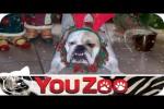 Video - Tierische Weihnachten - Lustige Tierbilder unterm Weihnachtsbaum