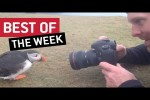 Video - die besten Videos der letzten Mai-Woche 2019