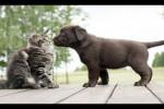 Video - Katzen treffen das erste mal einen Hunde-Welpen