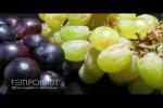 Video - die Verwandlung einer Traube in eine Rosine