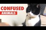 Video - Verwirrte Tiere