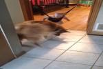 Video - nach dem Schatten gesprungen