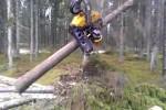 Video - So macht Bäume fällen Spass