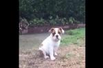 Video - Erster Regen für diese Bulldogge