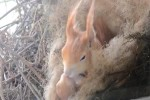 Video - Eichhörnchen-Nest