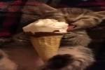 Video - Das Eis ist soooo lecker