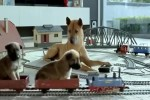 Video - Die moderne Hundefamilie