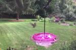 Video - Kolibri in Zeitlupe