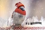 Video - It's wintertime - Es ist Winterzeit