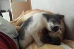 Video - Katze neckt Hund