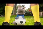 Video - World Cup Cats