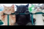 Video - Was Tiere So Denken 86