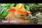 Video - Die lustigsten Tiere des Monats Oktober 2020