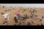 Video - Ganz viele lustige Hoppalas