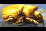 Video - Die 12 teuersten Tiere der Welt!