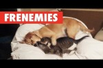 Video - Frenemies
