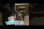 Video - Der Hund und der Papierball