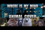 Video - The Pixies - Where Is My Mind (Animal Cover)