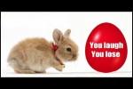 Video - Funny Bunny