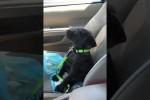 Video - Müder Hund