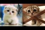 Video - Witzige Katzen