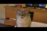 Video - Katze muss niesen