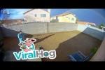 Video - Welpe nimmt Frauchen als Baum