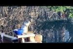 Video - Betrunkenes Eichhörnchen