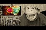 Video - Knut und das Corona Virus