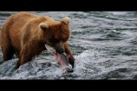 Video - kleine Reise durch Alaska